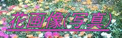 花画像(写真)